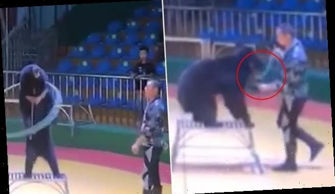 Circus trainer caught jabbing endangered bear with a giant 'needle'