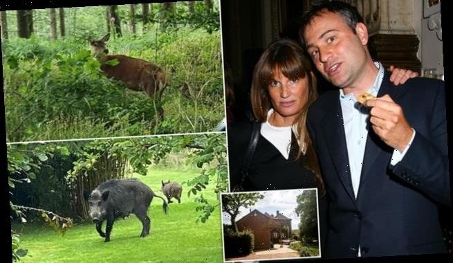 Ben Goldsmith probed over claims he broke rules over release of deer