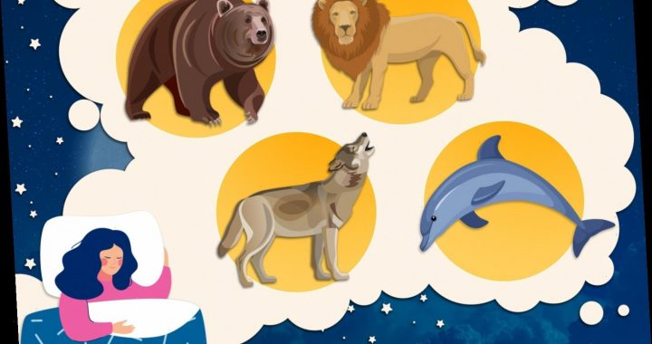 There are four types of sleeper…. And it's bad news if you're a wolf who lives with a lion