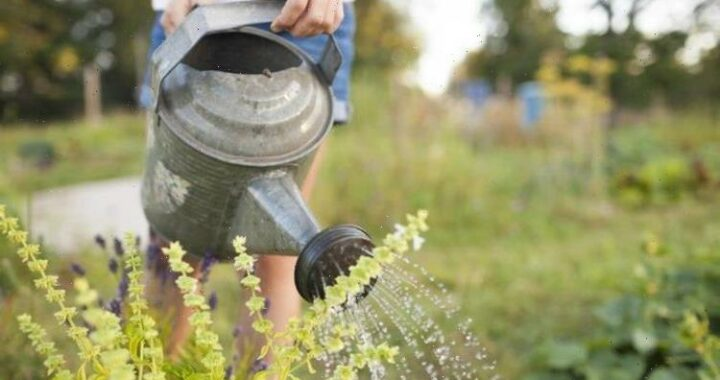 Watering tips: 5 mistakes you might be making in when watering your garden