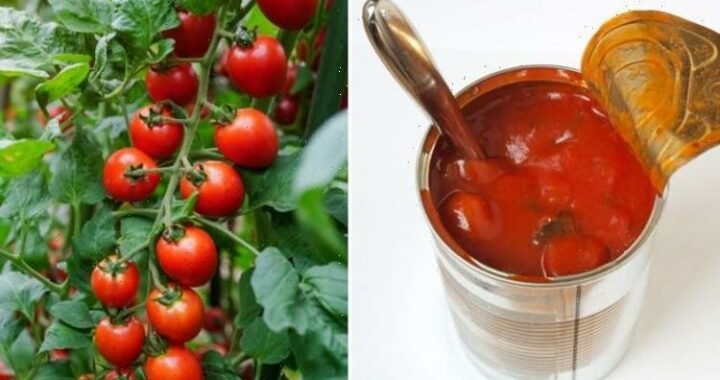 Bolognese sauce may be hard to find this summer due to global shortage of tinned tomatoes