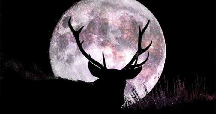 Buck Moon spiritual meaning: What does the July Buck Moon mean for you?