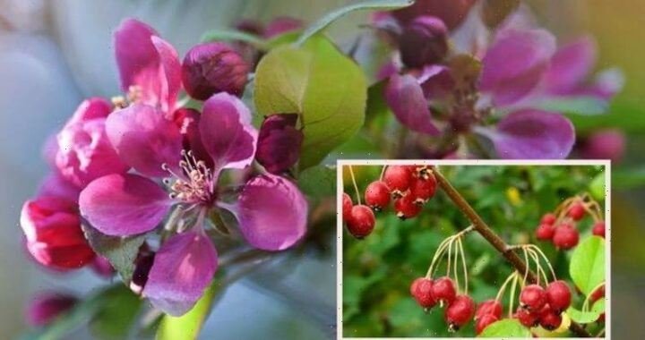 'Cherry pick the best!' – Garden pro shares top choice of plants for autumn foliage