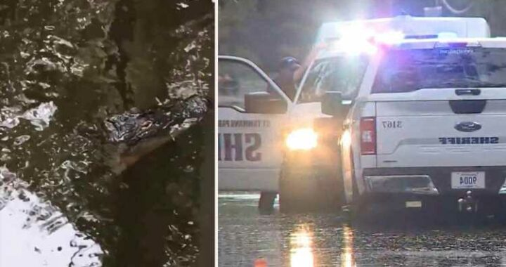 Louisiana dad, 71, savaged by alligator in front of horrified wife amid Hurricane Ida is named as hunt for body goes on