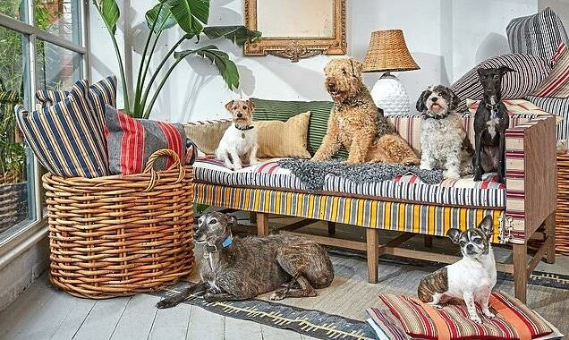 Luxurious dog couches are on the rise on sale from £12,300
