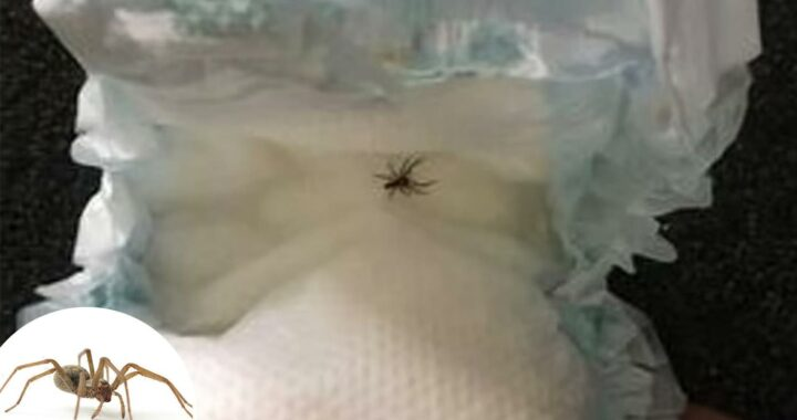 Nurse shares four signs your child needs to see a doctor if they're bitten by a spider – and the top places they hide