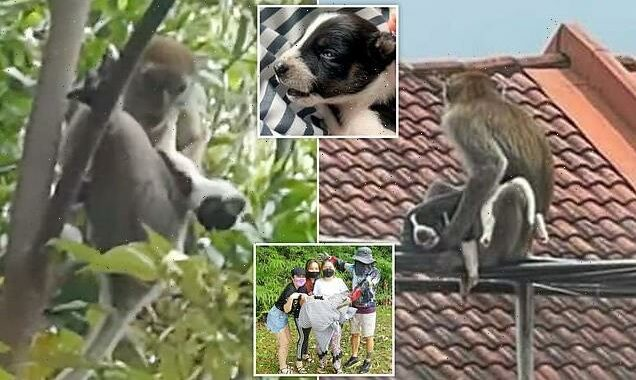 Puppy is rescued from a wild MONKEY that kidnapped the tiny dog