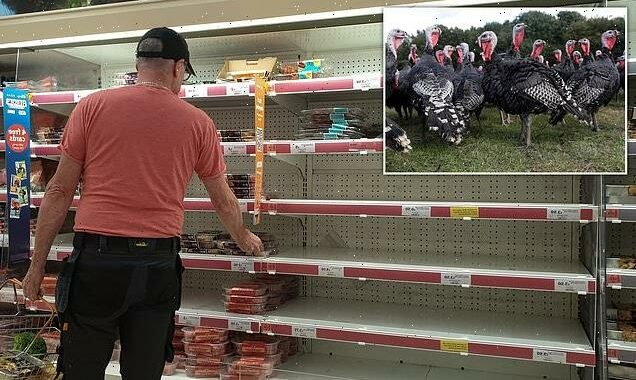 Turkey farmers see 250% surge in orders amid Christmas dinner panic